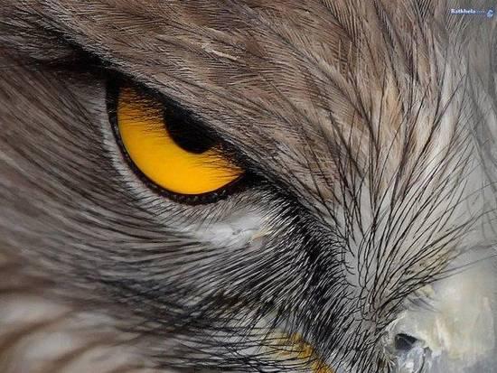 Tecnologia Inglese Occhio di Falco